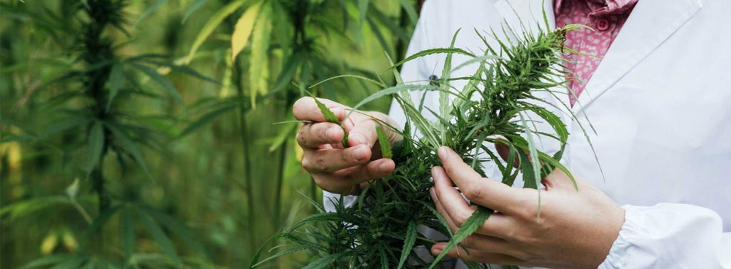 MEDICAL CANNABIS TREATMENT REQUIRES GREAT PRECISION-& WE ARE THE HANDS DOWN THE BEST WITH THAT