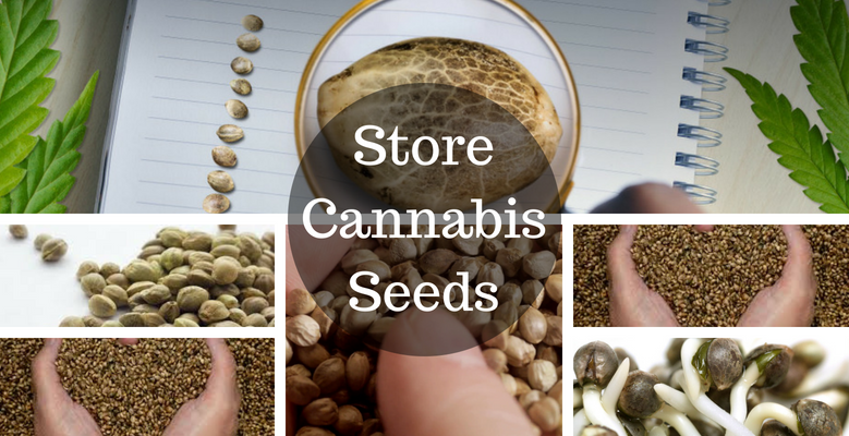 Ways to Preserve Your Seeds