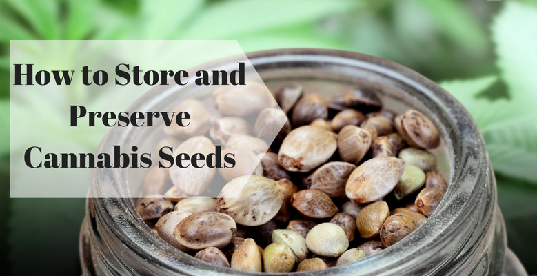 How to Store and Preserve Cannabis Seeds