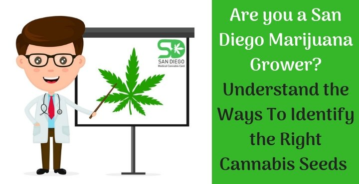 san diego marijuana growers