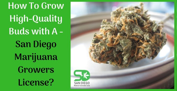 San Diego marijuana growers license