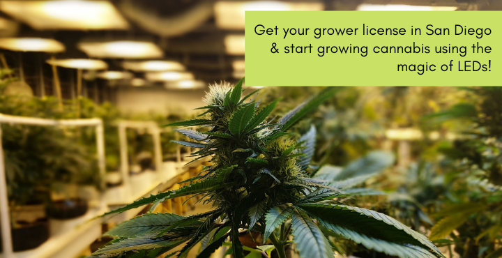 grower license in San Diego