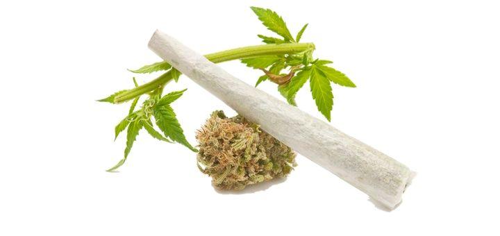 Smoking bud